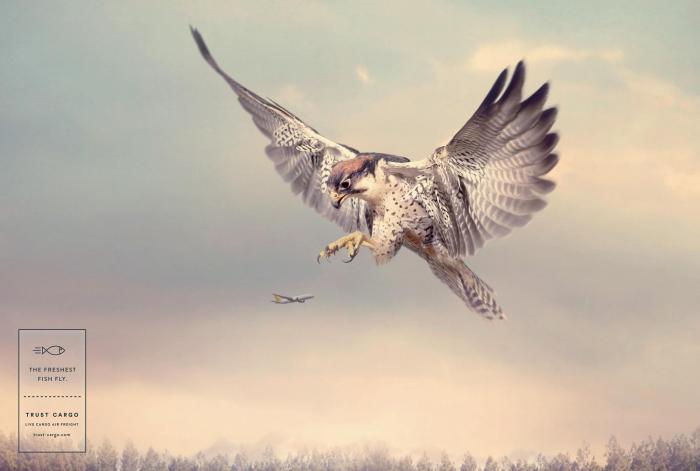 tci_hunters-falcon-aot.jpg